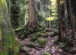Увидите Кологривский лес