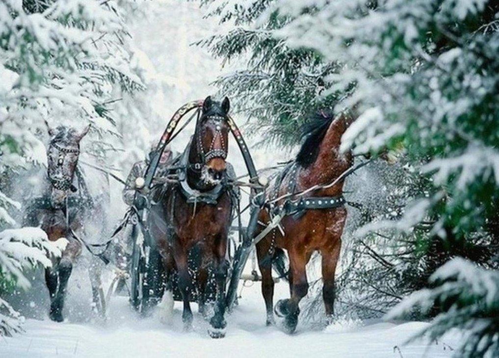 Зимние картинки с санями и лошадками, поздравление маме